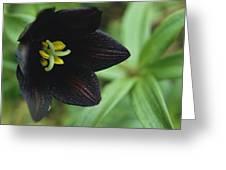 A Beautiful Fritillaria Camschatcensis Greeting Card