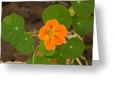 A Beautiful Orange Trumpet Shaped Flower With Green Leaves Greeting Card