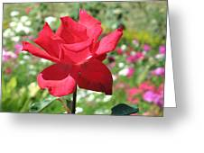A Beautiful Red Flower Growing At Home Greeting Card