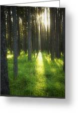A Beautiful Wooded Area Greeting Card