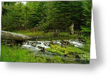 A Beaver Dam Spilling Over Greeting Card