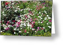 A Bed Of Beautiful Different Color Flowers Greeting Card