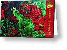 A Berry Merry Christmas Greeting Card