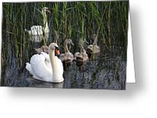A Bevy  Of Swans. Greeting Card