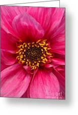 A Big Pink Flower Greeting Card