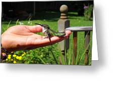 A Bird In The Hand. Greeting Card
