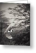 A Bird With A Large Wing Span Takes Greeting Card