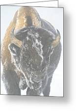 A Bison Covered By Ice And Fog Greeting Card
