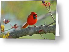 A Bit Red Greeting Card