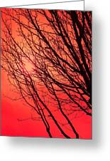 A Black Winter Tree On Red Greeting Card