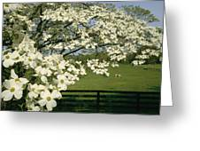 A Blossoming Dogwood Tree In Virginia Greeting Card