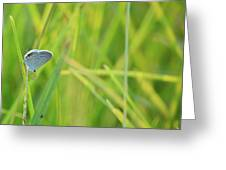 A Blue And Grass Greeting Card