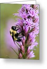 A Bombus Bumblebee On A Greeting Card