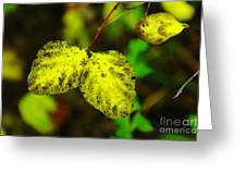 A Bright Yellow Dying  Greeting Card