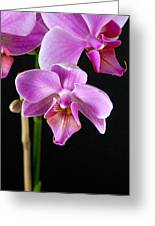 A Brilliant Orchid Greeting Card