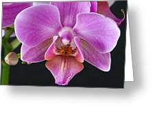 A Brilliant Orchid II Greeting Card