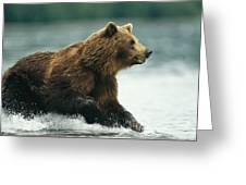 A Brown Bear Rushing Through Water Greeting Card