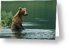 A Brown Bear Standing In Water Hunting Greeting Card