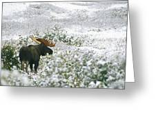 A Bull Moose On A Snow Covered Hillside Greeting Card