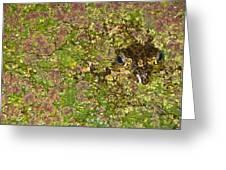 A Bullfrog Rana Catesbeiana Hiding Greeting Card