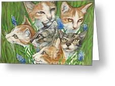 A Bunch Of Cats In The Grass Greeting Card