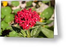 A Bunch Of Small Red Flowers Greeting Card