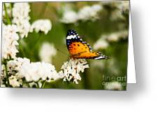 A Butterfly Affair Greeting Card