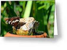 A Butterfly Enjoys A Drink Greeting Card