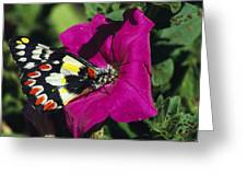 A Butterfly Lands On A Pink Flower Greeting Card
