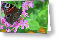 A Butterfly On The Pink Flower 2 Greeting Card