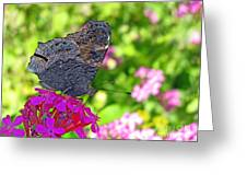 A Butterfly On The Pink Flower Greeting Card