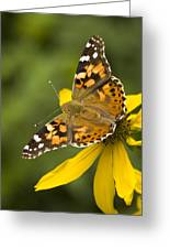 A Butterfly Sits Atop A Yellow Greeting Card