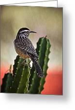 A Cactus Wren  Greeting Card