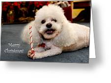 A Candycane For Puppy Greeting Card