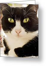 A Cat Greeting Card