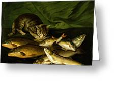 A Cat With Trout Perch And Carp On A Ledge Greeting Card by Stephen Elmer
