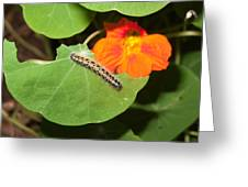 A Caterpillar Eating The Leaves Of A Plant With A Beautiful Orange Flower Greeting Card