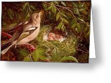 A Chaffinch At Its Nest Greeting Card
