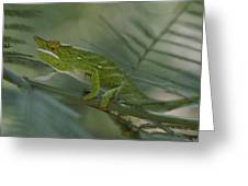A Chameleon With Yellow Eyes Balances Greeting Card