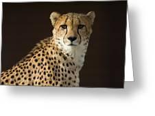 A Cheetah Acinonyx Jubatus Urinates Greeting Card
