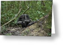 A Chimp At A Termite Mound Fishing Greeting Card by Ian Nichols