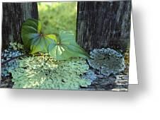 A Cinnamon Vine And Foliose Lichen Greeting Card