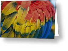 A Close-up View Of A Parrots Rainbow Greeting Card