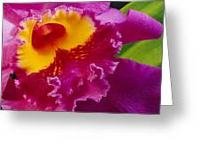 A Close View Of A Bright Pink Cattleya Greeting Card by Jonathan Blair