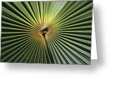 A Close View Of A Palm Frond Greeting Card