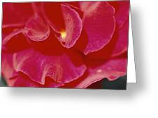A Close View Of A Rose Greeting Card