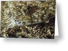 A Close View Of A Well-camouflaged Greeting Card