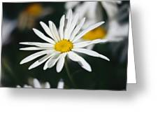 A Close View Of A Wild Daisy Greeting Card