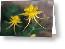 A Close View Of A Yellow Columbine Greeting Card