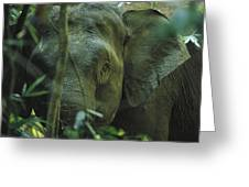 A Close View Of An Asian Elephant Greeting Card